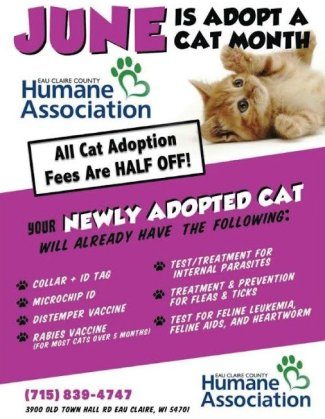 June - adopt-a-cat month Poster